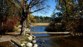 Eaux de plus près de la source de source du fleuve Mississippi au parc d'état d'Itasca de lac, Minnesota banque de vidéos