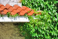Eave of architecture and green leaves cover Royalty Free Stock Photo