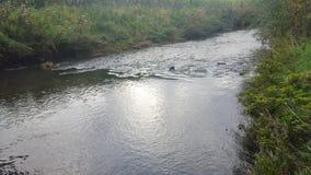eavening的自然河 库存照片