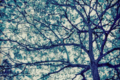 Eaves and tree. HDR effect leaves and tree trunk in semi silhouette with vintage retro background,soft focus Stock Photography