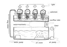 Eb en stroom hydroponic systeem Royalty-vrije Stock Afbeeldingen