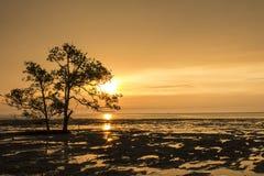 Eb op het strand bij zonsondergang royalty-vrije stock afbeelding