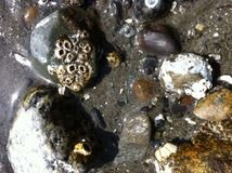 Eb - rotsachtig strand 2 Stock Foto's