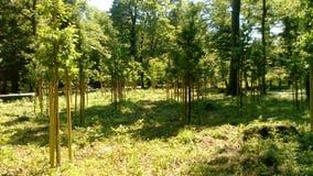 Eben gepflanzte Bäume stockfotografie