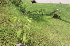 Eben gepflanzte Bäume Stockbild