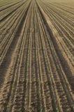 Eben gepflanzte Samen Stockfotos