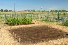 Eben gepflanzter Garten Lizenzfreie Stockbilder