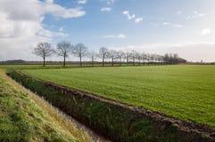 Eben gesätes Gras und eine Reihe von bloßen Bäumen Lizenzfreie Stockbilder