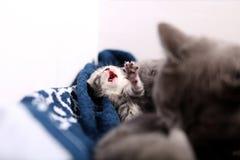 Eben getragenes Kätzchen lizenzfreies stockbild