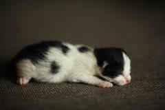 Eben getragenes kleines Kätzchen stockbilder