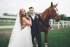Eben verheiratete Heiratspaare stehen mit schönem Pferd auf Natur lizenzfreie stockfotos