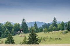 Ebene und der Kiefernwald Stockfotos