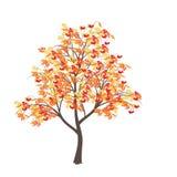 Eberesche mit gelben Blättern Stockbild