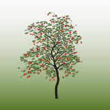 Eberesche mit grünen Blättern Lizenzfreies Stockbild