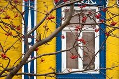 Eberesche und Fenster Stockbilder