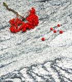 Eberesche verzweigt sich mit Bündeln der reifen Beeren auf Vicomte White GR Stockfoto