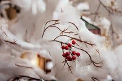 Ebereschenbeeren auf einer schneebedeckten Niederlassung Lizenzfreies Stockfoto