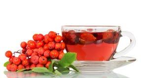 Ebereschenbeeren und Tasse Tee mit der wilden Rose lokalisiert Stockbild