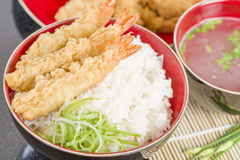 Ebi Tendon Royalty Free Stock Images