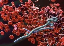 ebola Photographie stock libre de droits