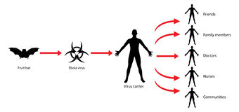 Ebola-Getriebe-Virus-Verbreitungs-Diagramm-Illustration Lizenzfreie Stockfotos