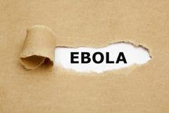 Ebola sönderrivet papper Arkivfoto