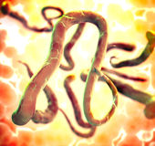 Ebola Royalty Free Stock Images