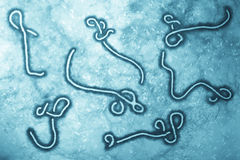 Ebola virus Arkivfoto