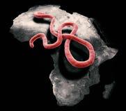 Ebola Virus lizenzfreie abbildung