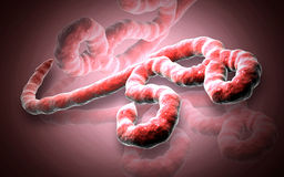 Ebola virus Stock Photography