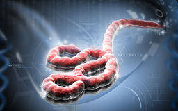 Ebola virus Stock Images