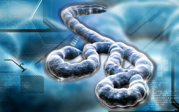 Ebola virus Stock Image