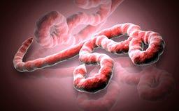 Ebolavirus royalty-vrije illustratie