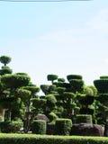 Ebony garden Stock Photo