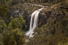 Ebor Falls Royalty Free Stock Photos