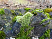 EbreljeСловения Å нашло каннелюры неандерталца стоковая фотография rf