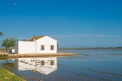 Ebro delta Stock Images