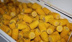 Ebullición del maíz de Cajun en una ebullición de los cangrejos Foto de archivo