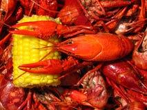 Ebullición de los cangrejos Imagen de archivo libre de regalías