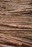Ecalyptus tree i materiel Arkivbilder