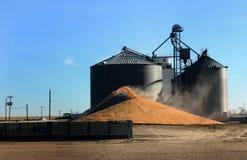 Eccedenza del cereale Fotografie Stock Libere da Diritti