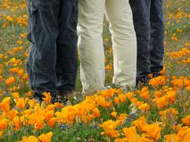 Eccezionale in Poppy Field Fotografie Stock