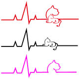 ECG with cat on white background. Vector illustration Stock Photography