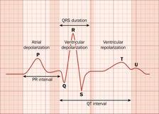 Ecg do coração ilustração do vetor