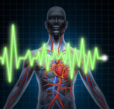 ECG and EKG  Cardiovascular System. Monitoring with heart anatomy from a healthy body on black background with blue grid as a medical health care symbol of an Royalty Free Stock Photography