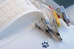 ECG vétérinaire avec l'enregistrement et les électrodes de papier Images libres de droits