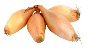 Echalion Shallots Stock Images