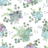 Зеленая красочная суккулентная печать дизайна вектора Echeveria безшовная Стоковое Изображение RF