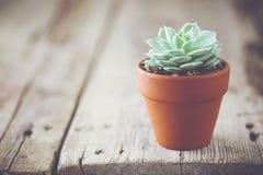 Echeveria dans le pot de fleur et l'espace de copie pour le texte Image stock