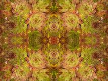 Echeveria longissima abstrakt 2 Fotografia Royalty Free